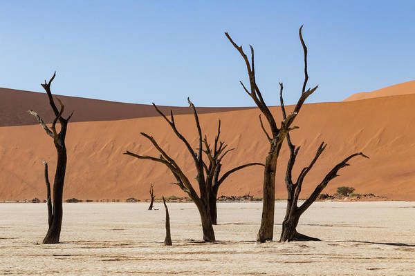 Photograph - Deadvlei Desert by Mache Del Campo