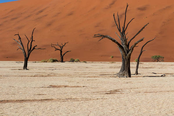 Photograph - Deadvlei  by Mache Del Campo