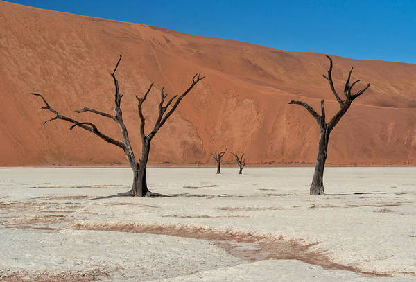 Photograph - Deadvlei Namibia  by Rand
