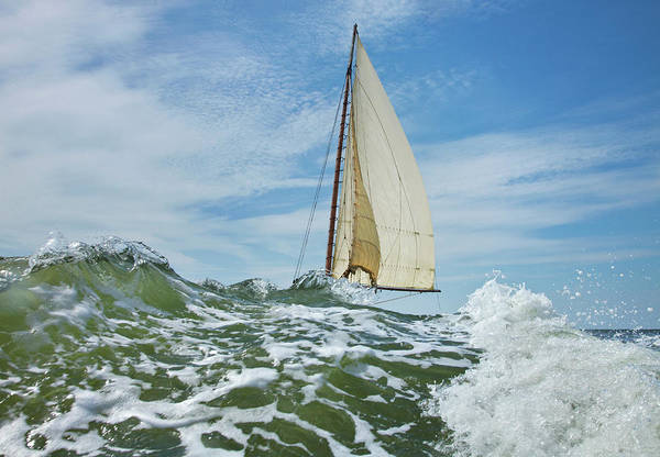 Annual Photograph - Deal Island Annual Skipjack Race by Greg Pease