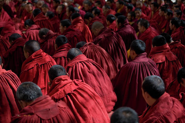 Shaved Head Photograph - Debating Monks by Caval