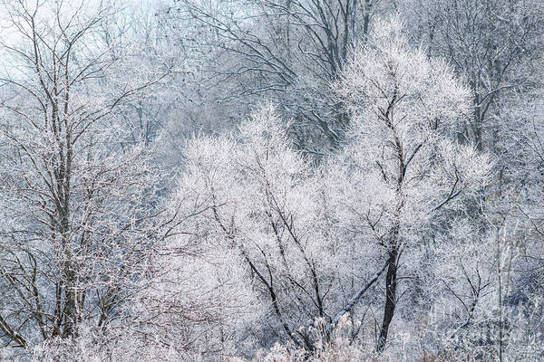 Photograph - December Hoarfrost by Thomas R Fletcher