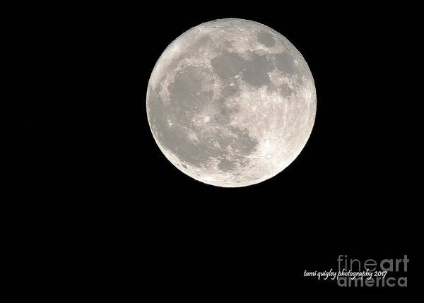 Photograph - December's Supermoon by Tami Quigley