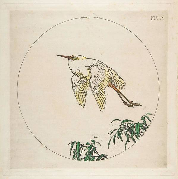 Wall Art - Painting - Decoration For A Plate An Egret Flying Above Bamboo Branches Felix Bracquemond French, Paris 1833-1 by Felix Bracquemond