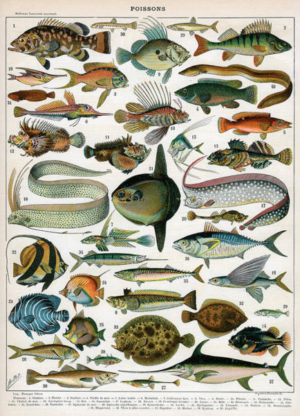Variation Digital Art - Decorative Print Poissons by Graphicaartis