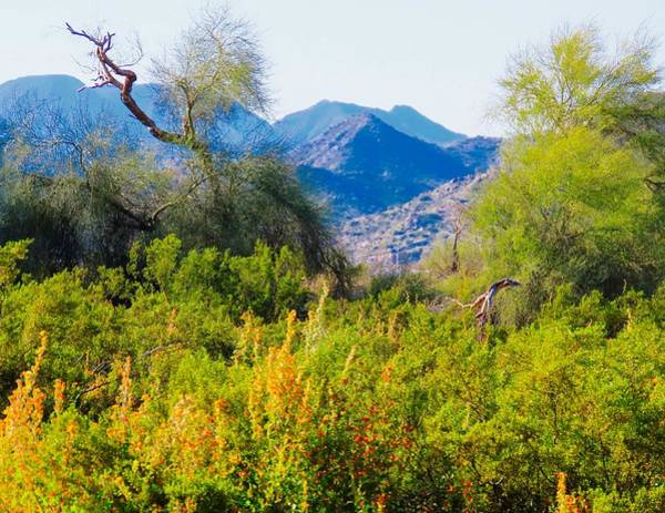 Photograph - Deep Desert Valley In A Sonoran Desert Spring by Judy Kennedy