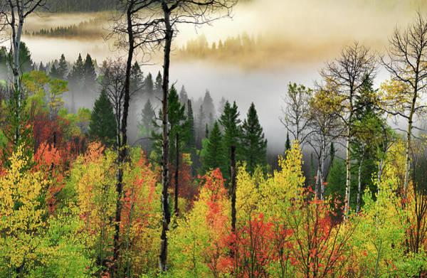 Photograph - Deep Forest Autumn by Leland D Howard