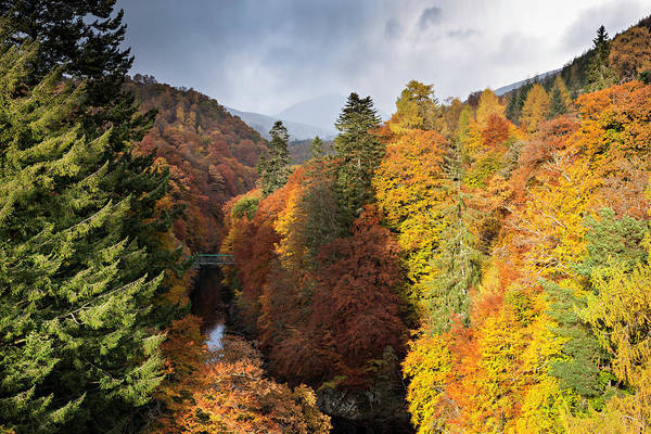 Threat Photograph - Deep Gorge With Autumnal Trees In Snow by Simon Butterworth