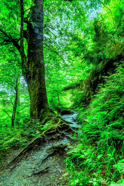 Photograph - Deep In The Forest On The  Appalachian Trail by Debra and Dave Vanderlaan