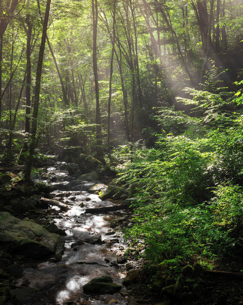 Photograph - Deep In The Forrest - Sun Rays by Mike Koenig