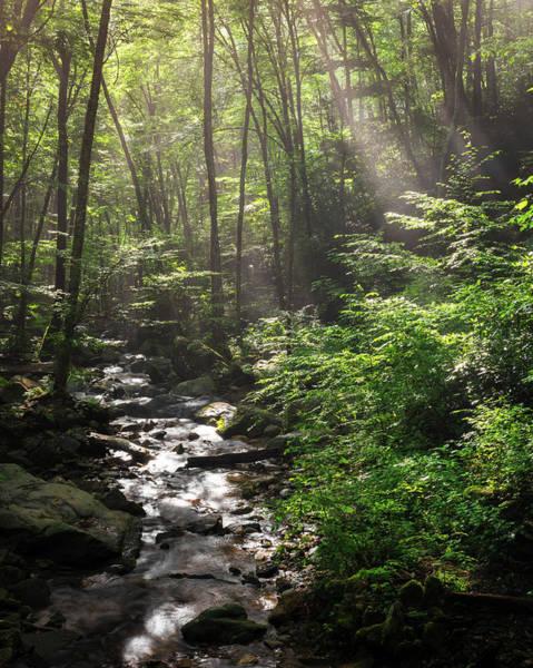 Deep In The Forrest - Sun Rays Art Print