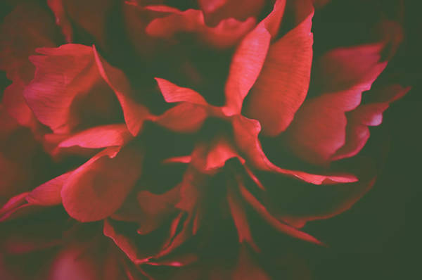 Photograph - Deep Red by Michelle Wermuth