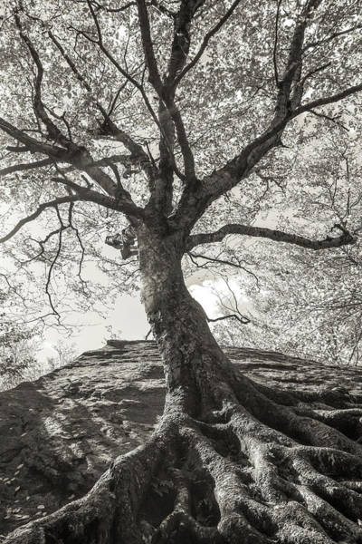 Photograph - Deep Roots by Dan Sproul