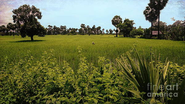 Wall Art - Photograph - Deep Tones Rice Fields Cambodia  by Chuck Kuhn