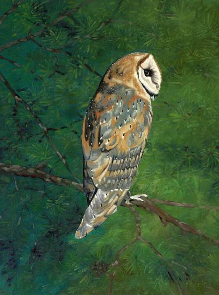 Wall Art - Painting - Deep Woods Barn Owl by Phil Chadwick