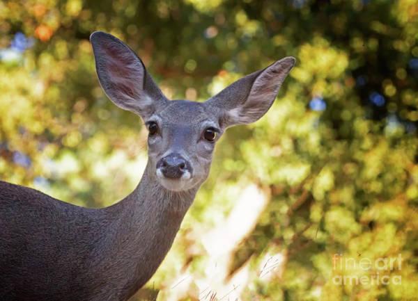 Wall Art - Photograph - Deer At Sunset by Ruth Jolly