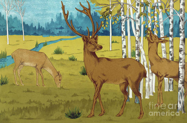 Wall Art - Painting - Deer By Maurice Pillard Verneuil by Maurice Pillard Verneuil