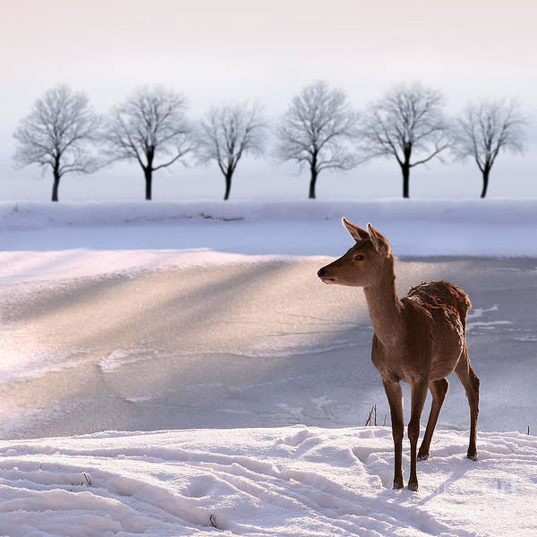Wall Art - Photograph - Deer Doe And  Snowy Landscape by Alina G