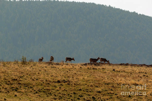 Photograph - Deer Herd On A Warm Colorado Spring Morning by Steve Krull