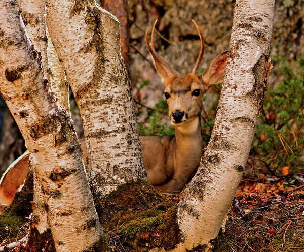 Deer Mixed Media - Deer In Hiding 007 by G Berry