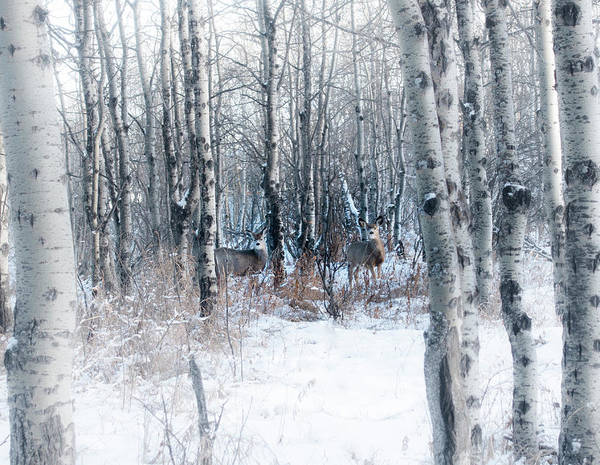Photograph - Deer In The Woods by Karen Rispin
