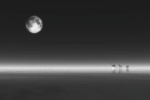 Digital Art - Deer by Jan Keteleer