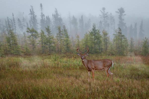 Photograph - Deer Mist Fog Landscape by Patti Deters