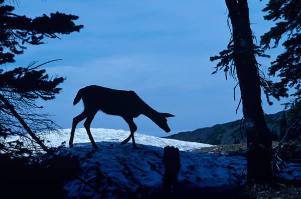 Wall Art - Photograph - Deer Silhouette by Jim Corwin