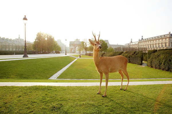 Out Of Context Photograph - Deer Standing In City Park by Chris Tobin