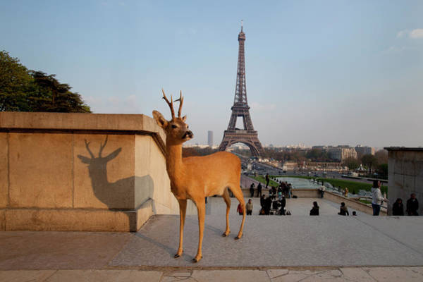 Out Of Context Photograph - Deer Standing In Front Of Eiffel Tower by Chris Tobin