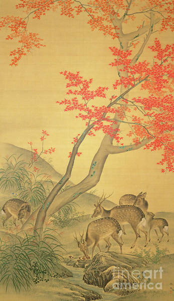 Wall Art - Painting - Deer Under A Maple Tree by Mori Tetsuzan
