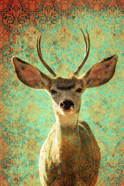 Photograph - Deers Ears by Mary Hone