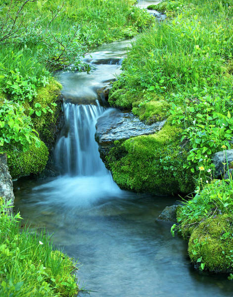 Wall Art - Photograph - Delicate Alpine Stream by Phototropic