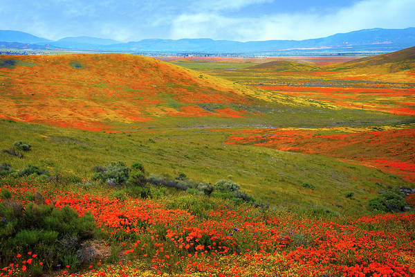 Photograph - Delightful Days In The Desert - Superbloom 2019 by Lynn Bauer