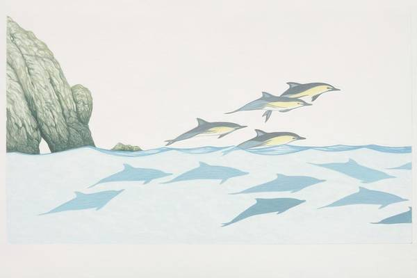 Mammal Digital Art - Delphinus Delphis, Group Of Common by Martin Camm