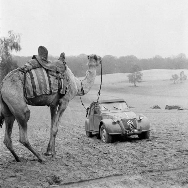 Sahara Photograph - Demonstration Citroen 2 Cv Saharienne by Keystone-france