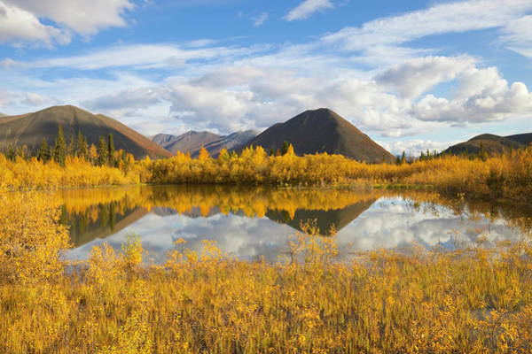 Wall Art - Photograph - Dempster Hwy, Fall Tundra And Pond by Eastcott Momatiuk
