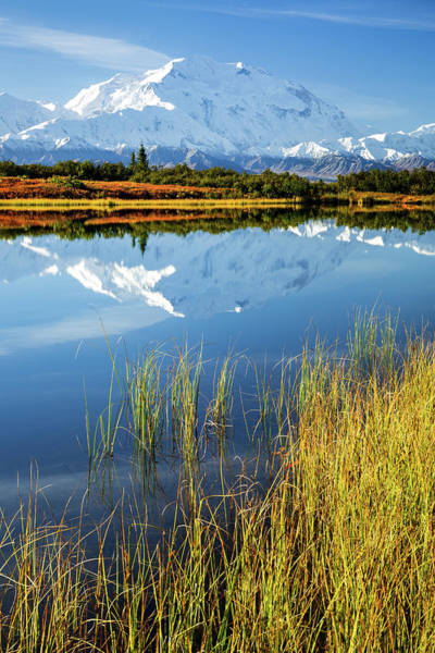 Photograph - Denali Reflection by Tim Newton