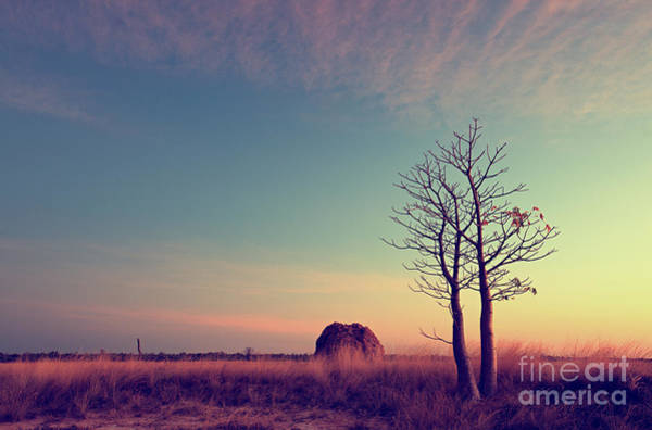 Leafless Tree Wall Art - Photograph - Derby Mudflats, At Sunset by Melbrackstone