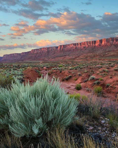 Vermilion Cliffs National Monument Photograph - Desert And Cliffs, Vermilion Cliffs Nm by