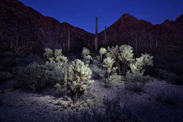 Cylindropuntia Bigelovii Photograph - Desert At Night by Fred Hood