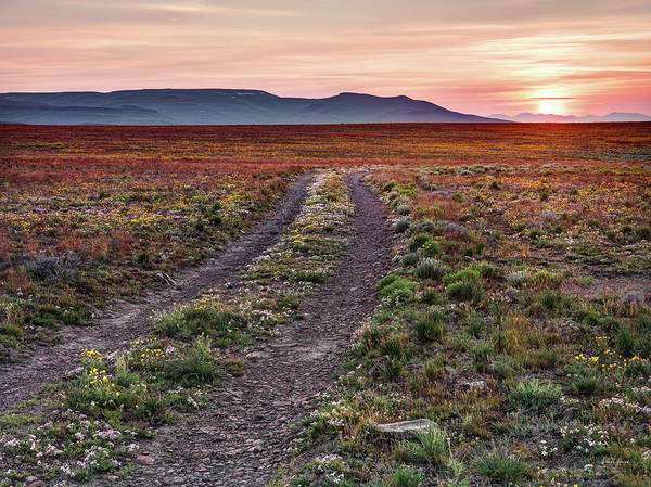 Photograph - Desert Beauty by Leland D Howard