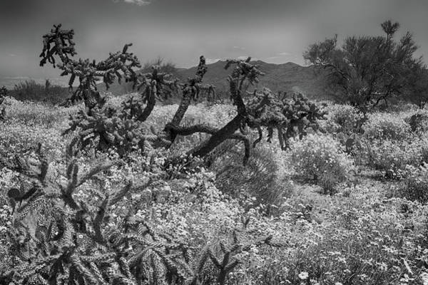 Wall Art - Photograph - Desert Bloom 1 by Rob Olson