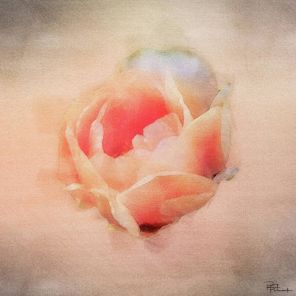 Photograph - Desert Bloom In Digital Watercolor by Rick Furmanek