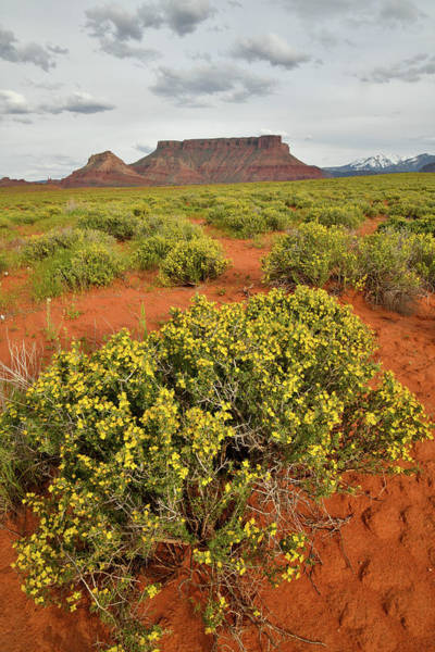 Photograph - Desert Blooming In Castle Valley Utah by Ray Mathis
