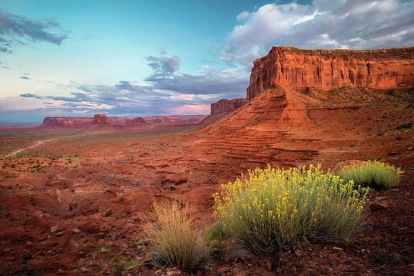 Photograph - Desert Bouquet II by Harriet Feagin