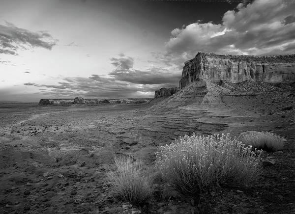 Photograph - Desert Bouquets Bw by Harriet Feagin