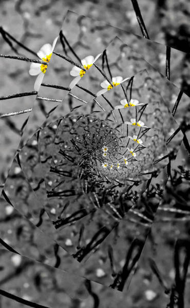 Photograph - Desert Daisy Wave Selective by Judy Kennedy