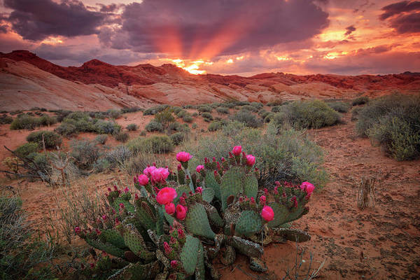 Photograph - Desert Dusk Rays by Johnny Adolphson