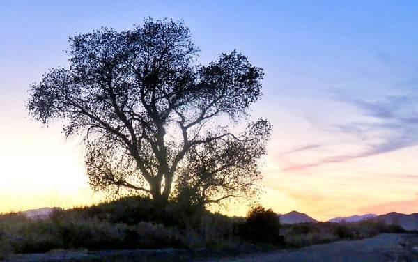 Photograph - Desert Farm Sunset by Judy Kennedy